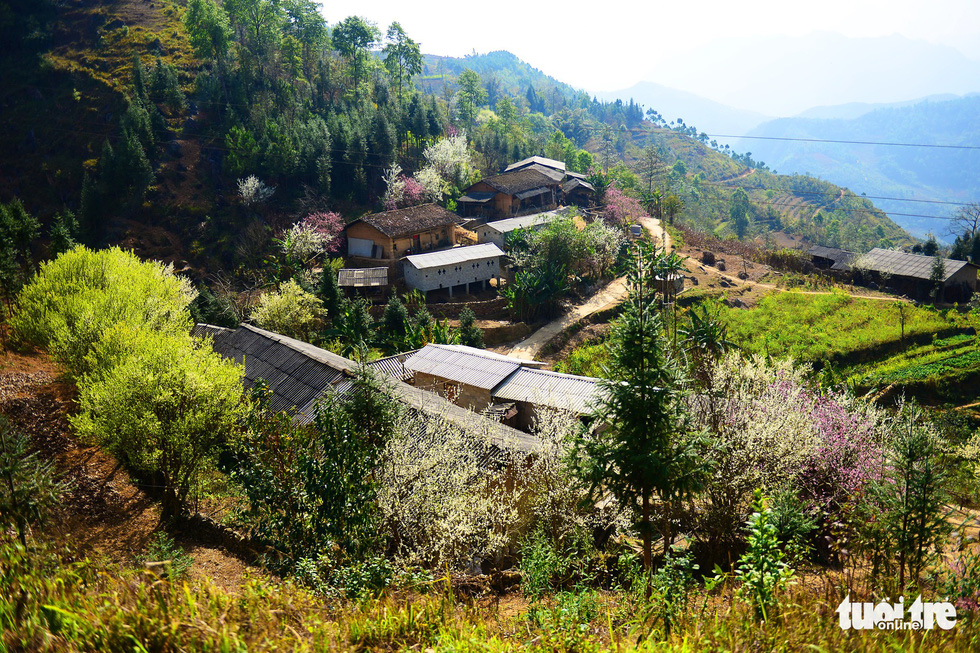 Những ngôi nhà của đồng bào dân tộc ở huyện Đồng Văn - Ảnh: QUANG ĐỊNH