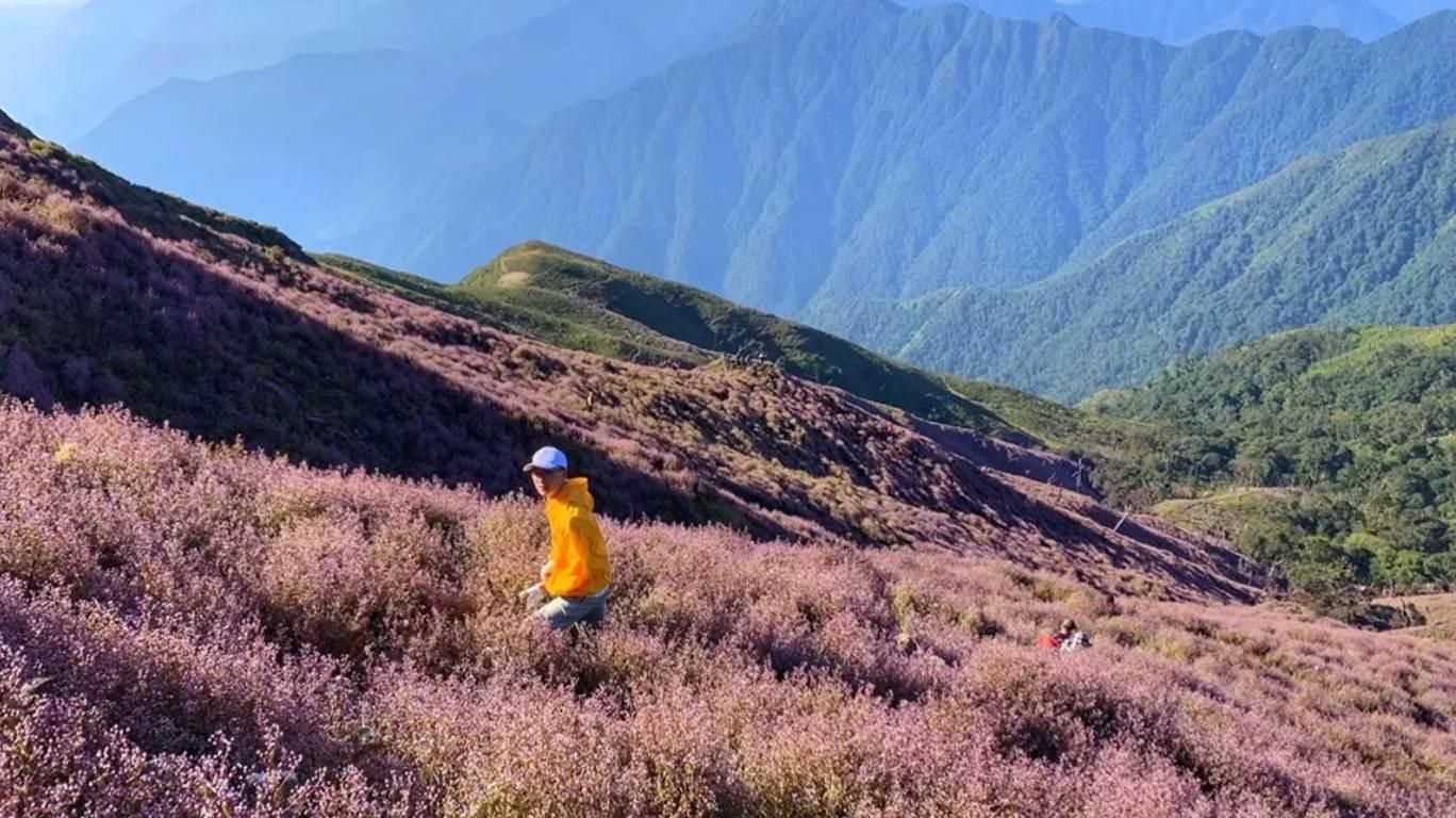 Cả triền núi toàn hoa chi pâu tím, tạo thành thảm hoa nhìn thích mắt, làm bạn chỉ muốn hòa mình vào chúng. Phía sau là dãy núi xanh rì làm nền.