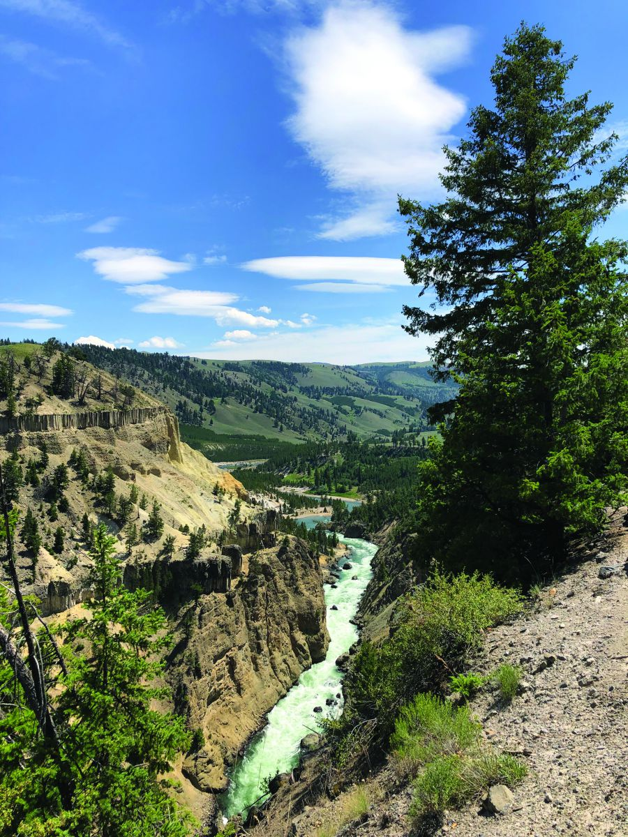 Thiên nhiên kỳ thú và hào sản Thế rồi dòng Madison êm đềm cũng dẫn chúng tôi về thị trấn cùng tên nằm ở biên giới Montana và Idaho, cửa ngõ phía Tây trong 4 lối vào của công viên quốc gia này. Hôm sau chúng tôi tiến vào Yellowstone. Vừa băng qua cổng kiểm soát chừng vài dặm, xe chúng tôi suýt mất tay lái vì một chú hươu phóng nhanh qua đường. Lời chào từ thiên nhiên thật độc đáo, bất ngờ nhưng cũng làm toát mồ hôi.