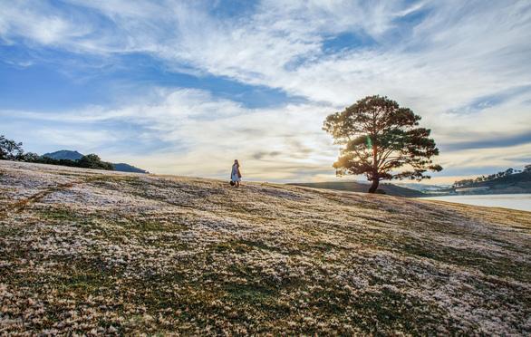Cỏ Đà Lạt đã bắt đầu pha sắc hồng ở khắp các vùng đồi khu vực quanh hồ Đankia - Suối Vàng - Ảnh: ĐINH VĂN BIÊN