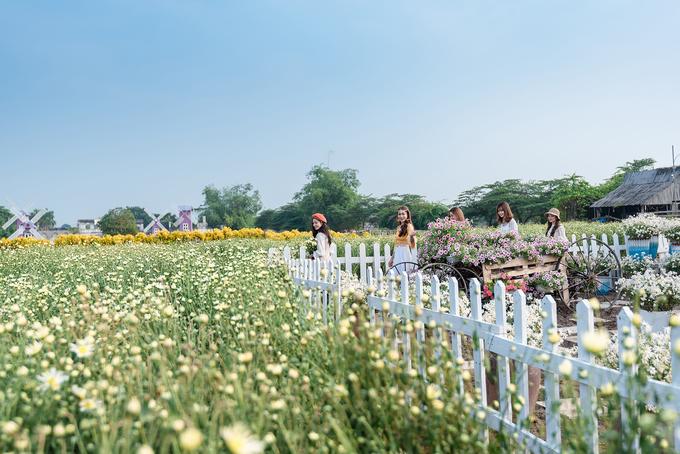 Ngoài cúc, khu vườn rộng lớn này còn nhiều loại hoa nở quanh năm, thu hút đông khách đến chụp ảnh.