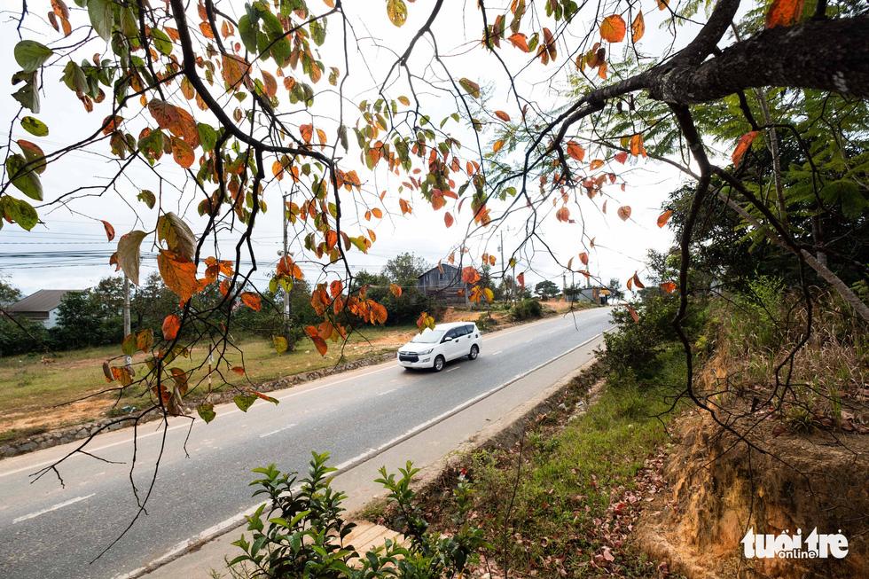 Những vườn hồng đổ lá đỏ đẹp và lớn nhất có thể kể đến là những khu vườn dọc tuyến đường nối Đà Lạt - Nha Trang đi qua xã Đa Nhim (huyện Lạc Dương, tỉnh Lâm Đồng). Đây cũng là khu vực được xem là vùng có dân cư lạnh nhất ở cao nguyên Lang Bian