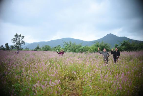 Mỗi ngày cánh đồng hoa này thu hút hàng trăm du khách từ khắp nơi đến tham quan - Ảnh: LÂM THIÊN