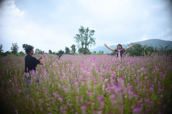 Cánh đồng hoa trải dài và lôi cuốn du khách bởi vẻ đẹp hoang sơ, tự nhiên - Ảnh: LÂM THIÊN