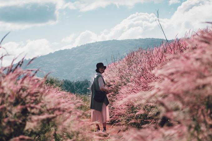 5.Đồi cỏ đuôi chồn hồng rực ở Đà Lạt