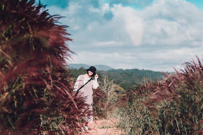 5.Đồi cỏ đuôi chồn hồng rực ở Đà Lạt5