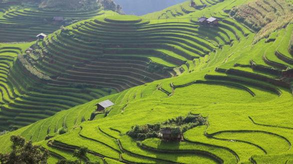 Ruộng bậc thang bao phủ 2.200ha đất ở Mù Cang Chải - Ảnh: Frans Sellies