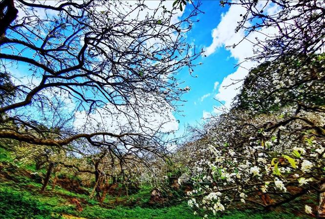 Trời xanh, mây trắng, núi non trùng điệp cùng với hoa mận trắng nở ngập trời tạo nên 1 vẻ đẹp mê hồn của thung lũng Mu Náu.
