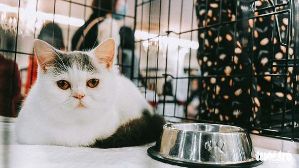 Một chú mèo với vẻ mặt buồn rầu cũng đủ thu hút đông đúc người yêu mèo vây quanh xuýt xoa - Ảnh: MAI THƯƠNG