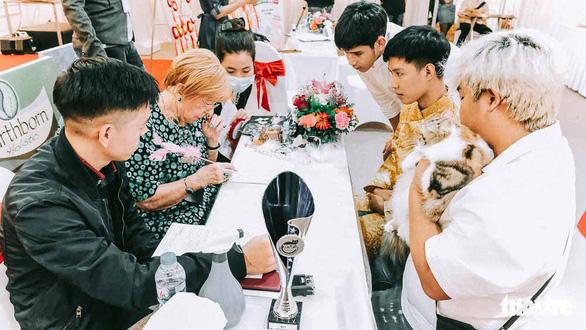 Ban giám khảo chấm tại bàn, đánh giá về hình thể và sức khỏe của những chú mèo trong vòng 1 của cuộc thi - ẢNh: MAI THƯƠNG