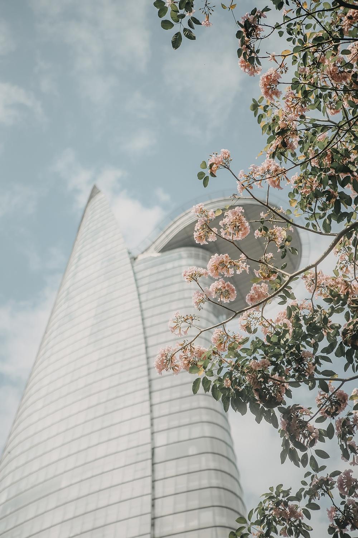 Ba điểm chụp ảnh hoa kèn hồng đẹp ở Sài Gòn1