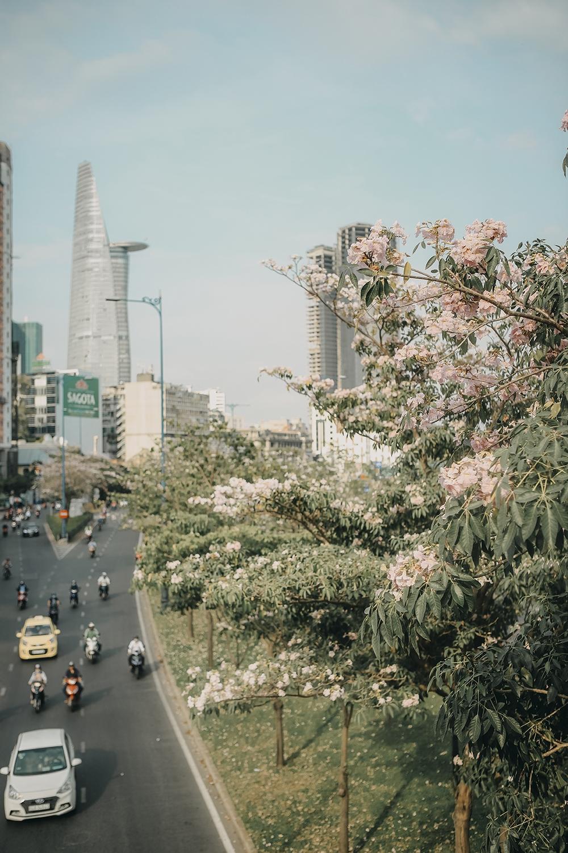 Ba điểm chụp ảnh hoa kèn hồng đẹp ở Sài Gòn10