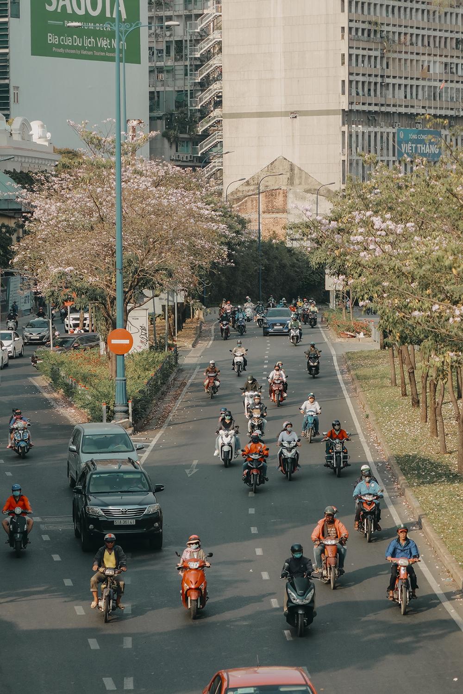 Ba điểm chụp ảnh hoa kèn hồng đẹp ở Sài Gòn3