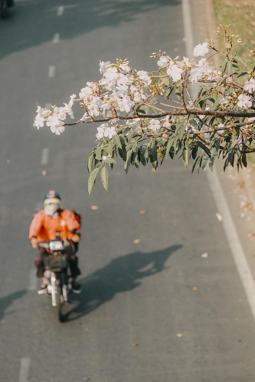 Ba điểm chụp ảnh hoa kèn hồng đẹp ở Sài Gòn4