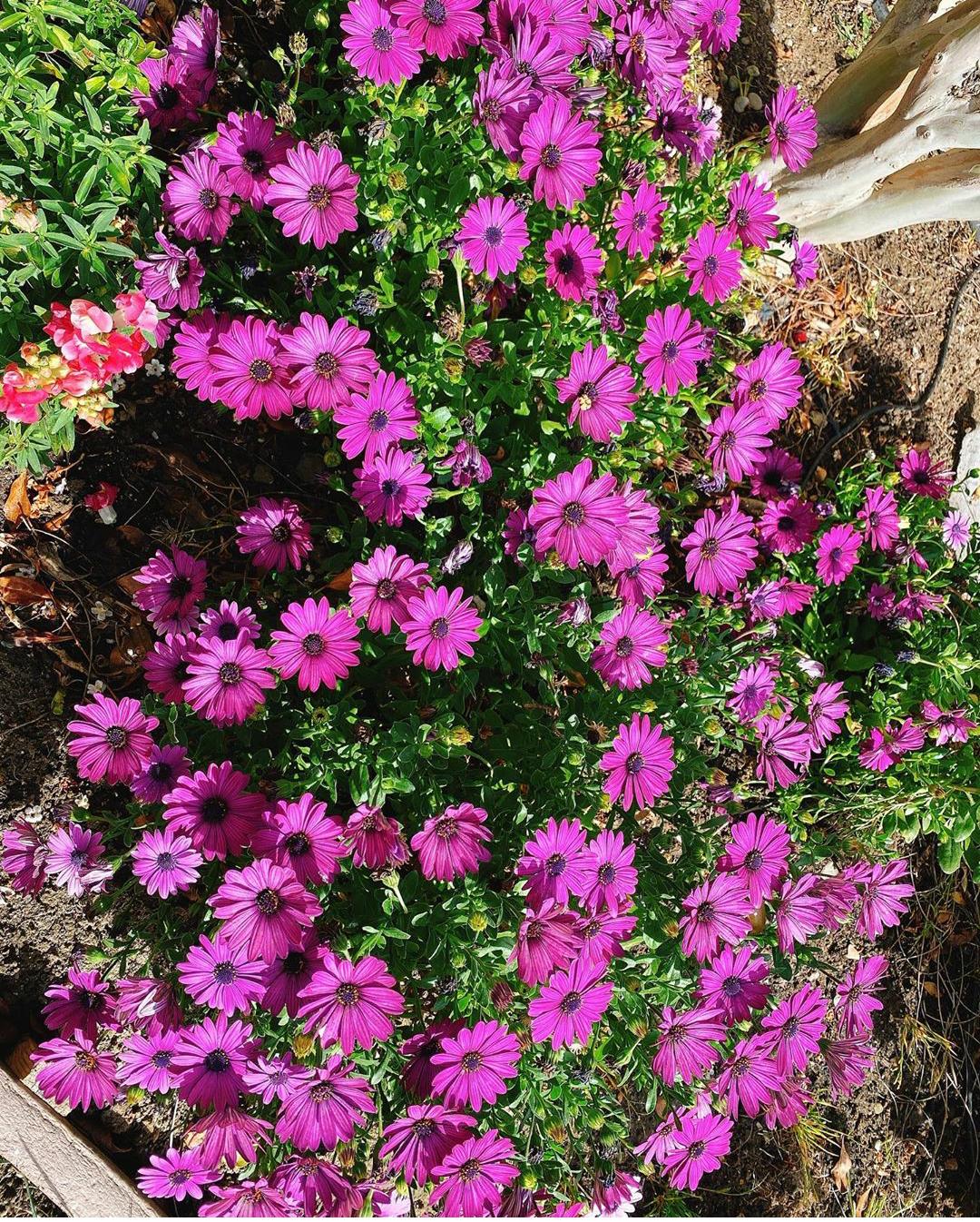 ...cùng một khu vườn đầy các loài hoa mà người đẹp yêu thích!