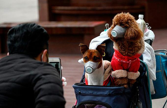 Người dân Trung Quốc đeo khẩu trang để phòng lây bệnh cho thú cưng. Ảnh: AFP