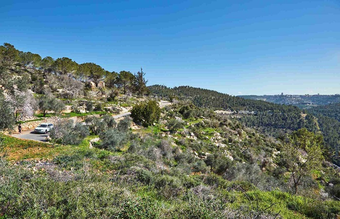 Forest of Sataf west of Jerusalem Israel. A beautiful area of hiking and enjoying the nature.