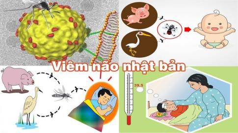 benh-viem-nao-nhat-ban-5-1591078534847276819566-1591086171269-15910861714231526637555