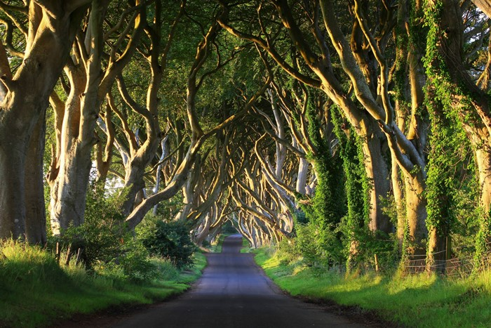 Dark Hedges in Co. Antrim, Northern Ireland