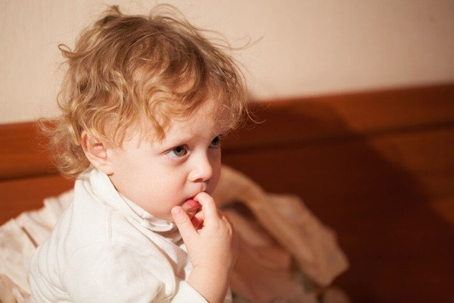 bigstock_Adorable_thoughtful_little_chi_62971870_800x533